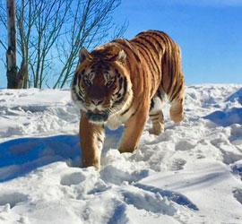 Réouverture du parc animalier ce samedi 9 février!
