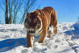 Réouverture du parc animalier ce samedi 9 février !